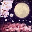 夜桜と満月 ライブ壁紙