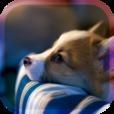 しあわせの犬育成ゲーム3D