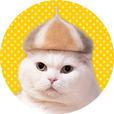 猫壁紙「抜け毛帽子」