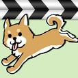 日刊いぬ動画 - 犬動画まとめ