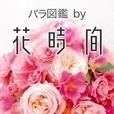 バラ図鑑by花時間