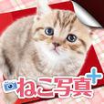 白猫の写真+(プラス)| 見られたくない写真を安心パスワード管理できるアプリ