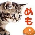 ネコ好き? 猫メモ 付箋紙ねこメモ張あつめゲーム