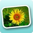 自動で写真整理!Simple Photo Album