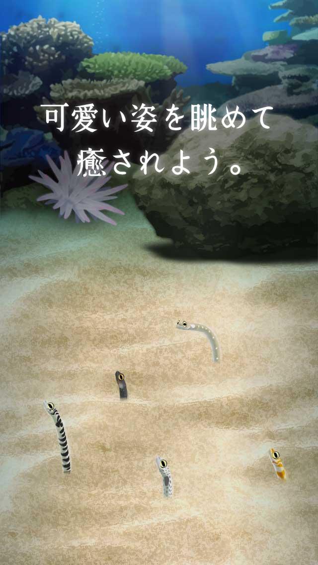 癒しのチンアナゴ育成ゲームのスクリーンショット_3