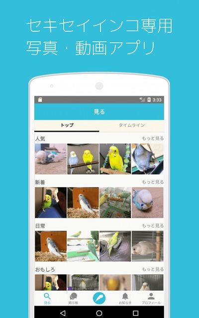 セキセイの木ーインコ専門写真・動画共有SNSのスクリーンショット_1