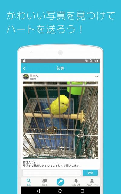 セキセイの木ーインコ専門写真・動画共有SNSのスクリーンショット_2