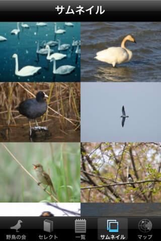 日本野鳥の会監修 野鳥図鑑のスクリーンショット_1