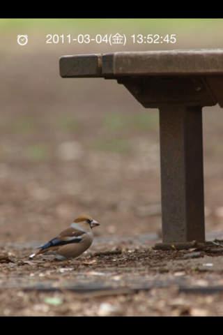 日本野鳥の会監修 野鳥図鑑のスクリーンショット_4