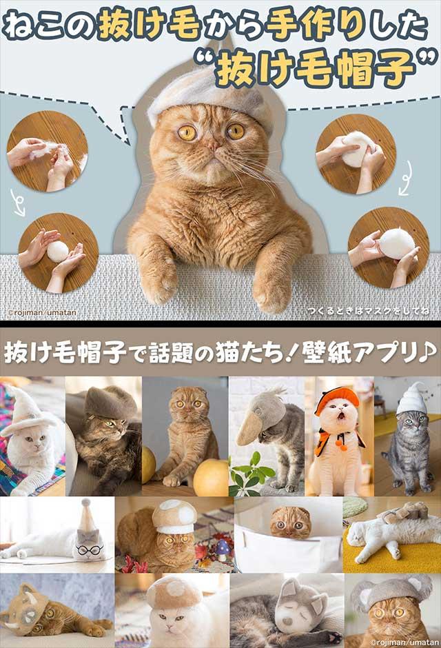 猫壁紙「抜け毛帽子」のスクリーンショット_1