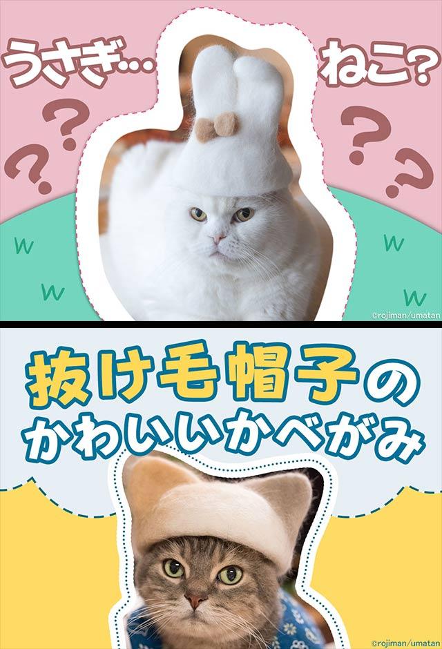 猫壁紙「抜け毛帽子」のスクリーンショット_4