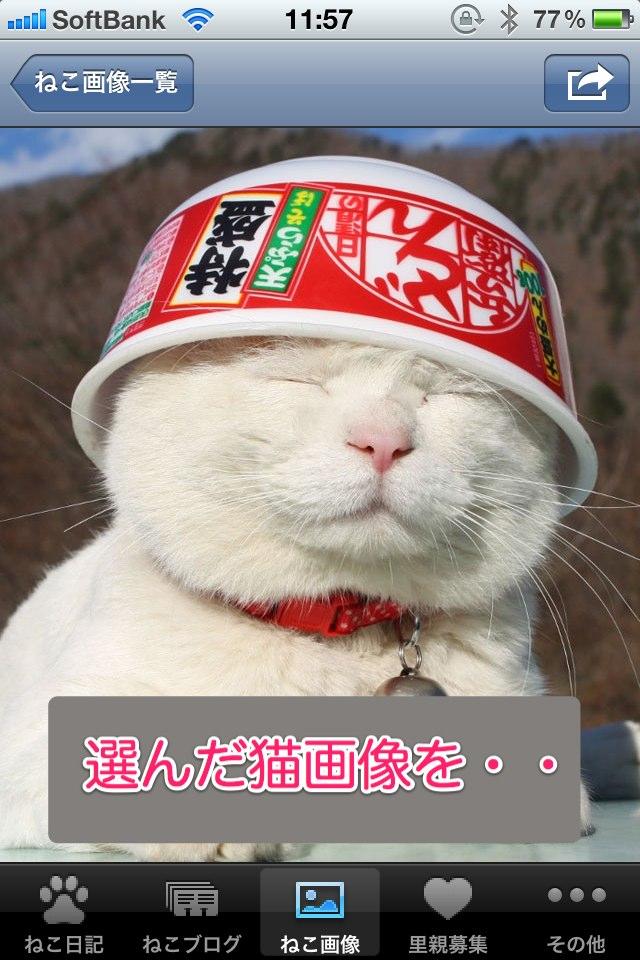 日刊ねこ新聞-猫情報まとめのスクリーンショット_4