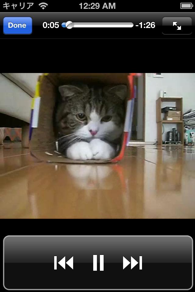 日刊ねこ動画 - 猫動画まとめのスクリーンショット_1