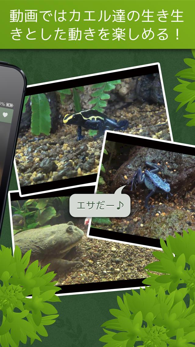 あわしま世界のカエル図鑑FREEのスクリーンショット_4
