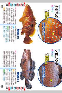 釣魚識別図鑑-ここで見分けようのスクリーンショット_4