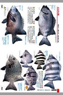 釣魚1400種図鑑 海水魚・淡水魚完全見分けガイドのスクリーンショット_2