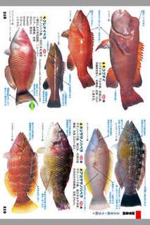 釣魚1400種図鑑 海水魚・淡水魚完全見分けガイドのスクリーンショット_3