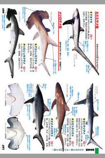 釣魚1400種図鑑 海水魚・淡水魚完全見分けガイドのスクリーンショット_5