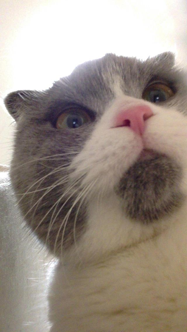 にゃんこ撮り!猫専用自分撮りカメラのスクリーンショット_2