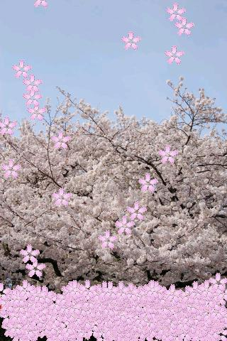 Sakura Petals Livewallpaperのスクリーンショット_1