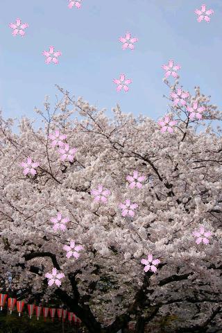 Sakura Petals Livewallpaperのスクリーンショット_2