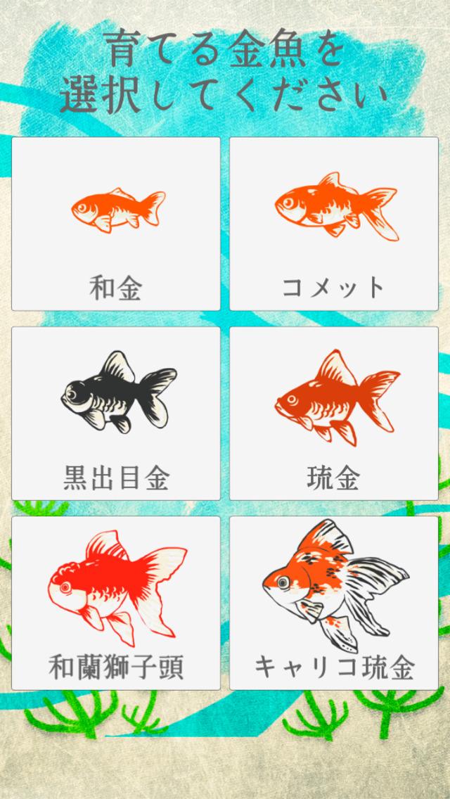 金魚育成アプリ-簡単なお世話でキンギョを育てる癒しのゲームのスクリーンショット_1