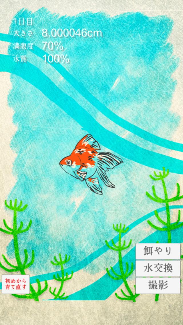 金魚育成アプリ-簡単なお世話でキンギョを育てる癒しのゲームのスクリーンショット_2