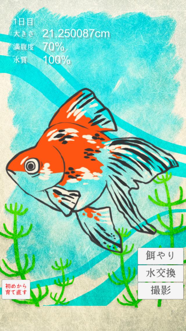 金魚育成アプリ-簡単なお世話でキンギョを育てる癒しのゲームのスクリーンショット_3
