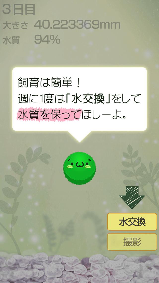 ゆる〜く まりも育成 - かわいい無料マリモ育成ゲームのスクリーンショット_2
