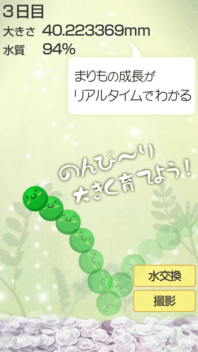 ゆる〜く まりも育成 - かわいい無料マリモ育成ゲームのスクリーンショット_3