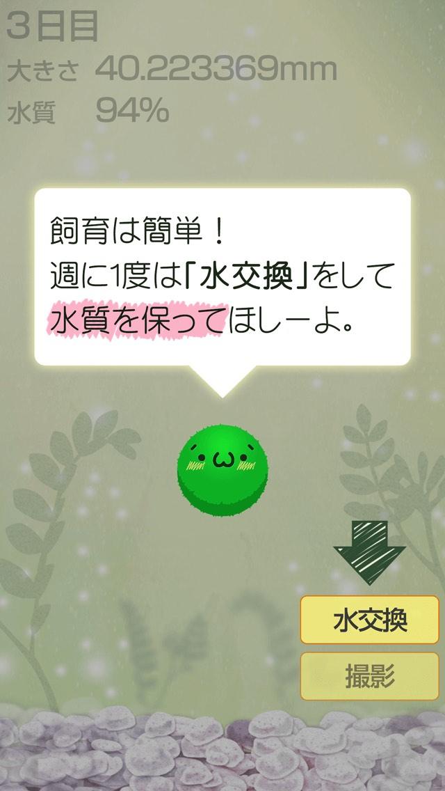 ゆる〜く まりも育成のスクリーンショット_2