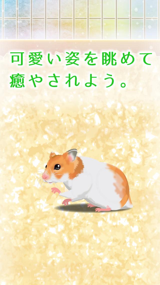 癒しのハムスター育成ゲームのスクリーンショット_3