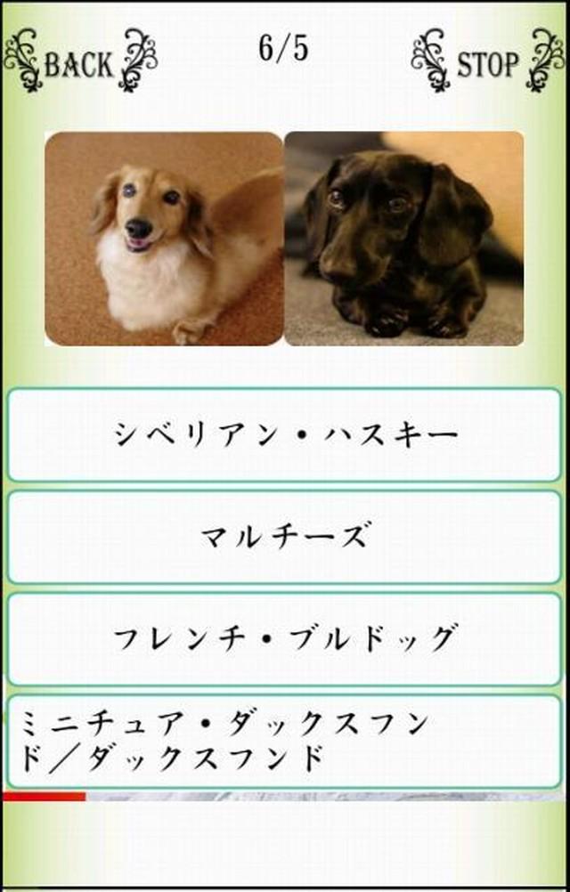 Names/わんにゃばー いろんな名前覚えよう(犬・猫・鳥)のスクリーンショット_3