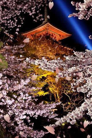 夜桜 ライブ壁紙のスクリーンショット_1