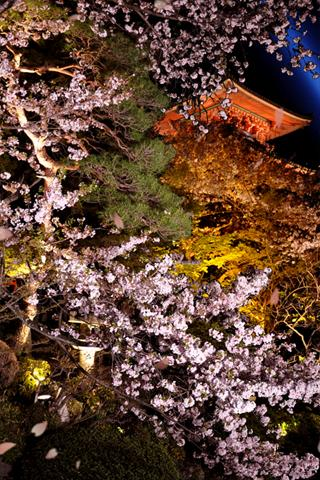 夜桜 ライブ壁紙のスクリーンショット_2
