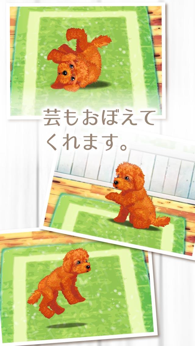 癒しの子犬育成ゲーム〜トイプードル編〜のスクリーンショット_3