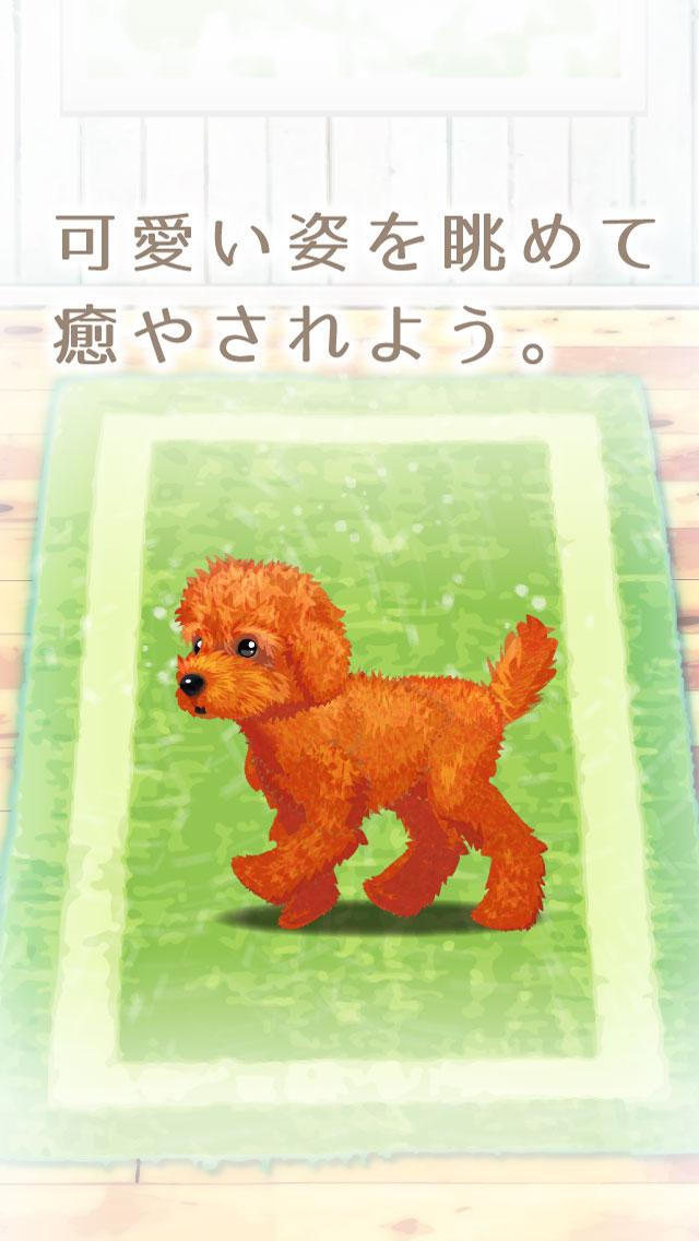 癒しの子犬育成ゲーム〜トイプードル編〜のスクリーンショット_5