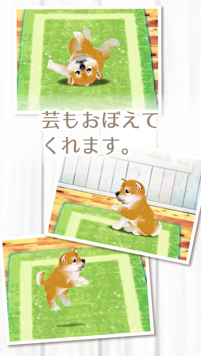 癒しの子犬育成ゲーム〜柴犬編〜(無料)のスクリーンショット_3