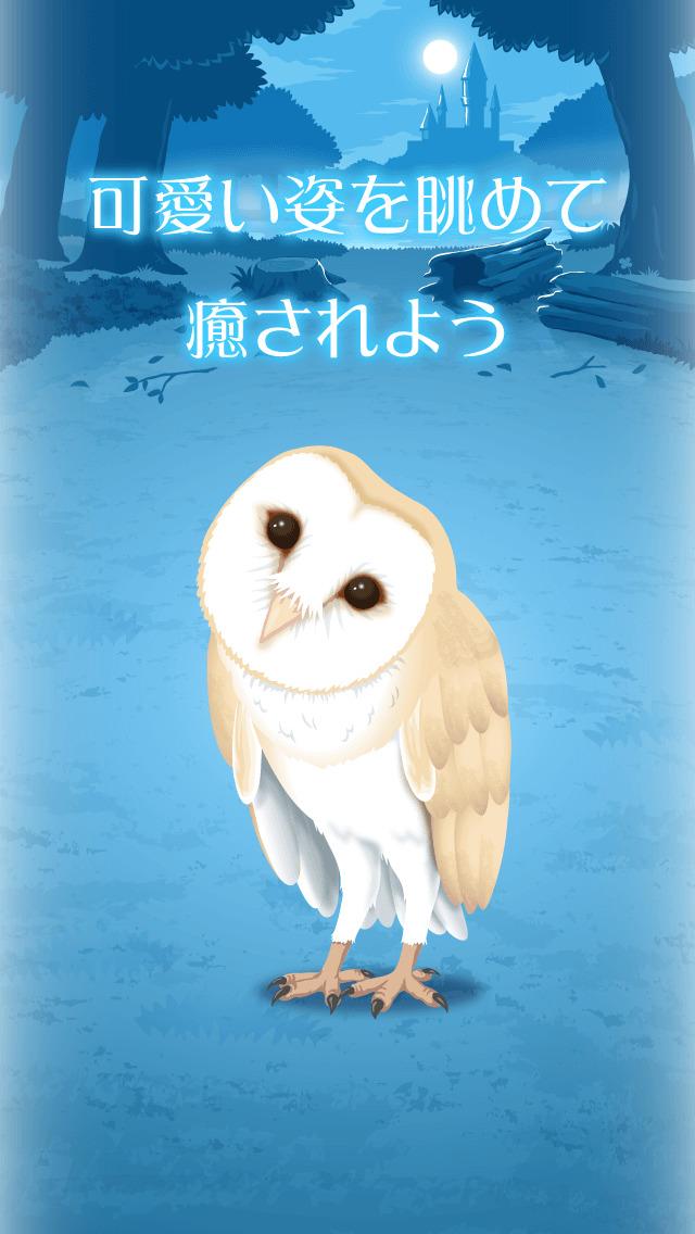 リアルなフクロウ育成ゲーム〜不思議なフクロウ〜のスクリーンショット_3