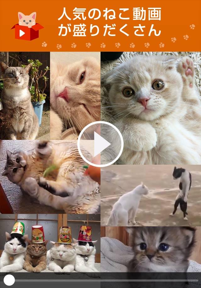 ねこTube for YouTube 癒しの猫動画まとめアプリのスクリーンショット_1