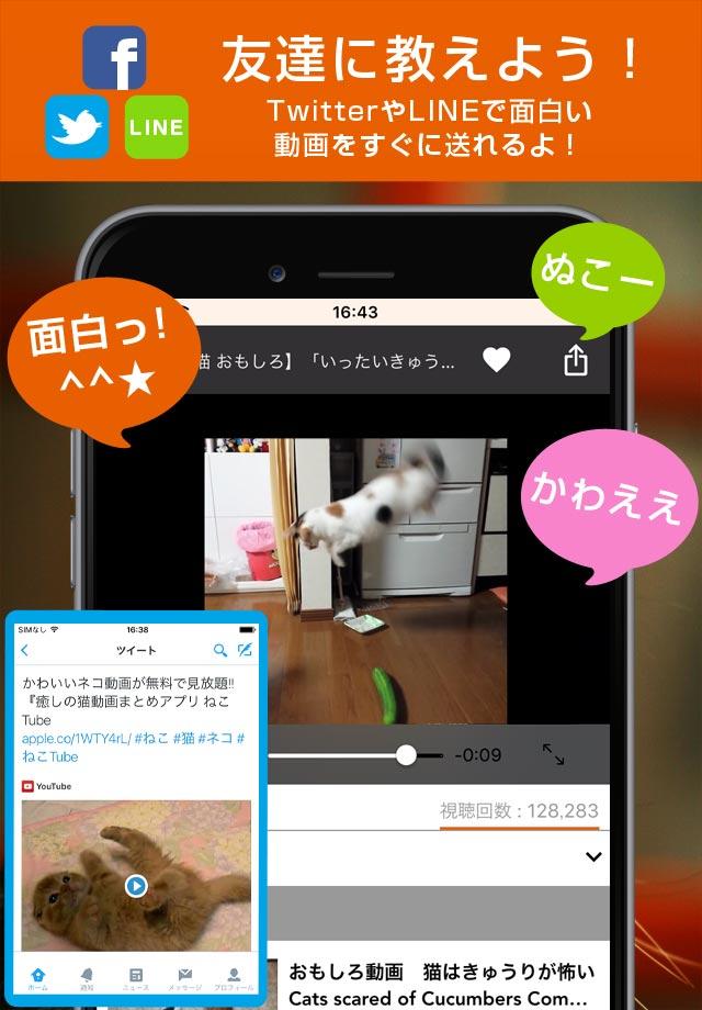 ねこTube for YouTube 癒しの猫動画まとめアプリのスクリーンショット_3
