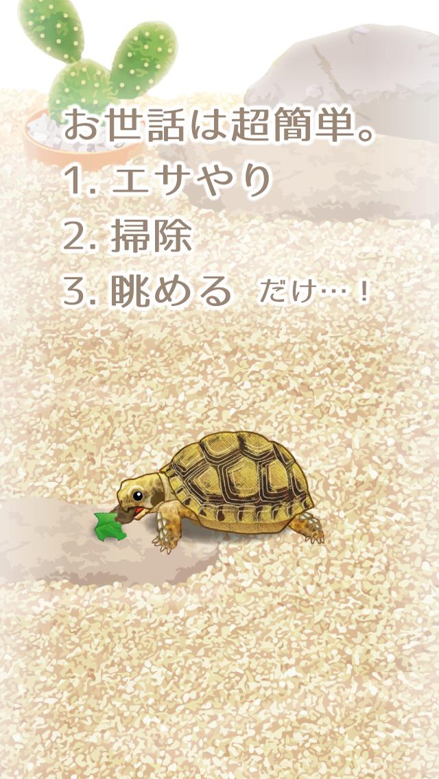 癒しのカメ育成ゲーム(無料)のスクリーンショット_2