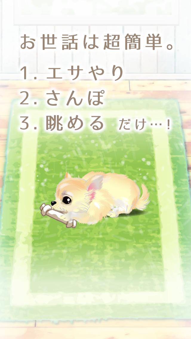 癒しの子犬育成ゲーム〜チワワ編〜(無料)のスクリーンショット_2