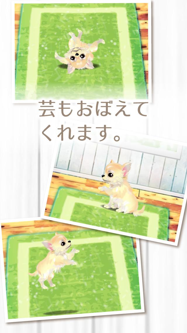 癒しの子犬育成ゲーム〜チワワ編〜(無料)のスクリーンショット_3