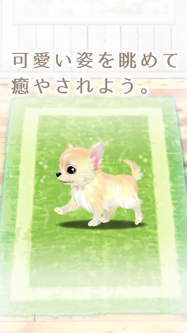 癒しの子犬育成ゲーム〜チワワ編〜(無料)のスクリーンショット_5