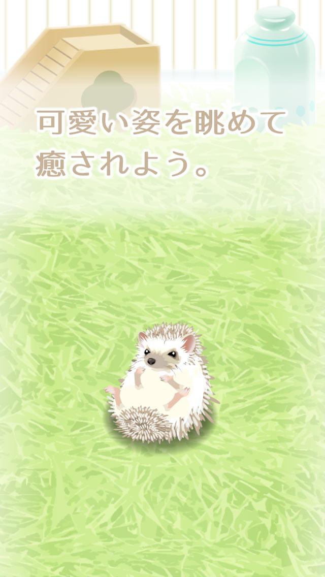 癒しのハリネズミ育成ゲームのスクリーンショット_3