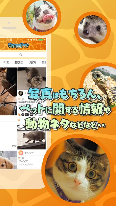 SNAP PETS~スナップペット・ペット写真・情報共有コミュニティ~のスクリーンショット_2