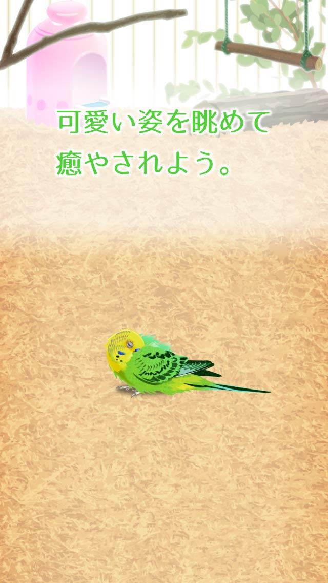 癒しのインコ育成ゲームのスクリーンショット_3