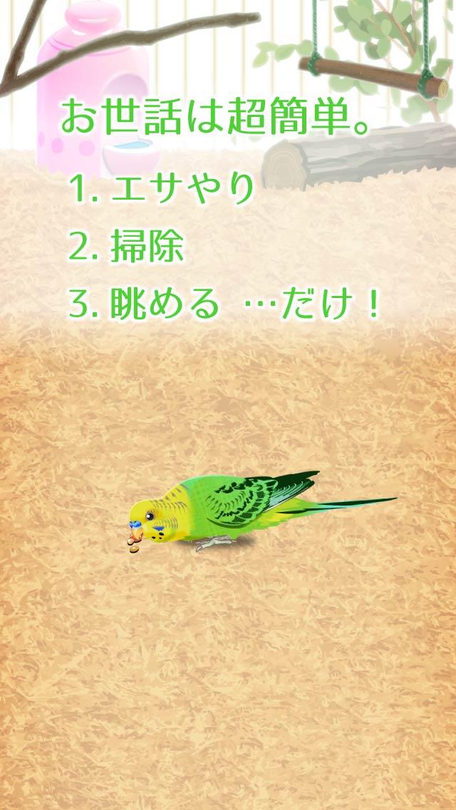 癒しのインコ育成ゲームのスクリーンショット_2
