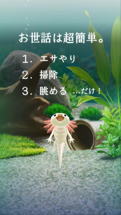 癒しのウーパールーパー育成ゲームのスクリーンショット_2